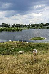 Lippe  renaturieres Flussauengebiet oberhalb der Lippemuendung in den Rhein  Wesel  Niederrhein  Nordrhein-Westfalen  Deutschland