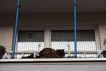 Deutschland  Bremen - Katze hinter einem Netz auf dem Balkon eines Wohnblocks
