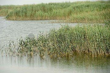 CHINA-XINJIANG-Ruoqiang-TAITEMA LAKE-Ökologische Verbesserung (CN)