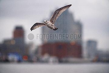 Fotomontage: Vogel fliegt über Main vor Wolkenkratzer