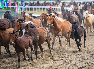 CHINA-INNER MONGOLIA-HORSE-EQUINE CULTURE-EVENT (CN)