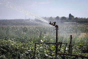 Gemuesefeld wird bei Trockenheit bewaessert  Inden  Nordrhein-Westfalen  Deutschland