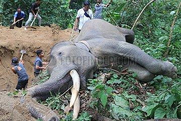 INDONESIEN-ACEH-Sumatra-Elefant-Leiche
