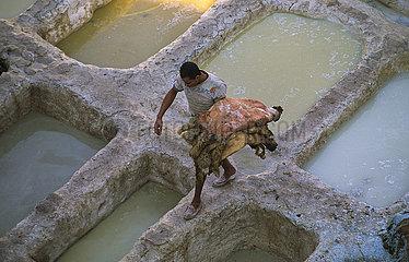 Fes  Marokko  Arbeiter traegt Tierhaeute in einer traditionellen Gerberei mit ihren Becken