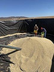 NAMIBIA-WINDHOEK-crop-ERNTE