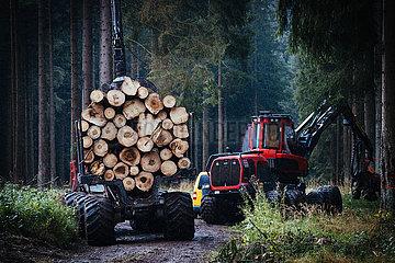 Der Harz - Reise durch das Waldsterben