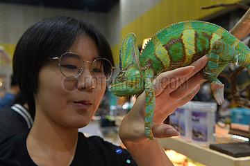 THAILAND-BANGKOK-PET-EXPO