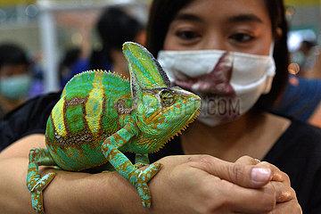 THAILAND-BANGKOK-PET EXPO THAILAND-BANGKOK-PET-EXPO