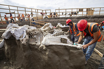 MEXIKO-MEXICO CITY-MAMMOTH SKELETONS-DISCOVERY