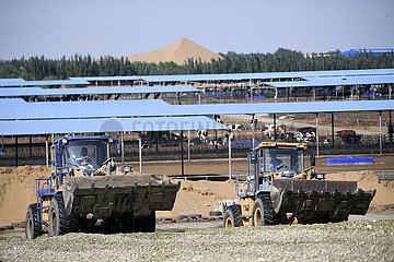 CHINA-NINGXIA-Zhongwei-DESERTIFIKATION-COW BREEDING (CN)
