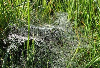 Neuenhagen  Deutschland  Tautropfen haben sich in einem Spinnennetz verfangen