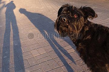 Berlin  Deutschland  Hund und Mensch werfen einen Schatten auf den Asphalt