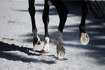 Hannover  Deutschland  Detailansicht  Pferdebeine im Galopp auf Kies