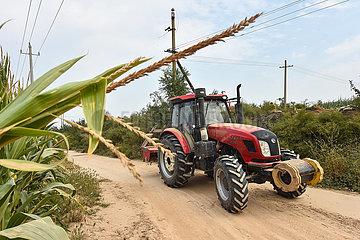 CHINA-SHANXI-yuncheng-Modernisierung der Landwirtschaft (CN)