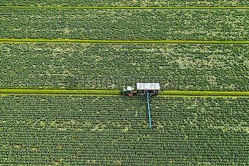 Drohnenaufnahme Kohlernte in Dithmarschen