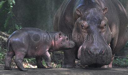 INDIEN-GUWAHATI-ZOO-HIPPO