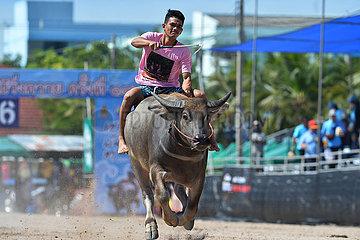 THAILAND-CHONBURI-BUFFALO RACING FESTIVAL