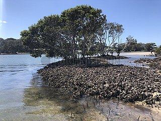 AUSTRALIEN-UNDERWATER ÖKOSYSTEM-künstlichen Riffen