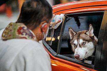 PHILIPPINEN-MANILA-Welttierschutztag-DRIVE-THRU PET BLESSING