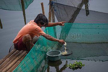 INDONESIEN-BOGOR-Zierfische CULTIVATION