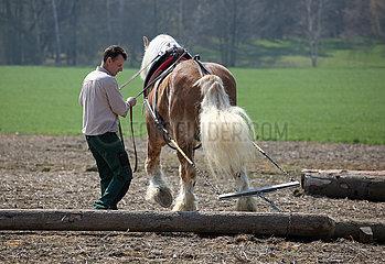 Glasten  Holzrueckepferd im Einsatz