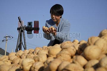 # CHINA-HEBEI-ZUNHUA-Walnuss (CN)