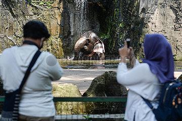 INDONESIEN-JAKARTA-Ragunan ZOO-WIEDERERöFFNUNG