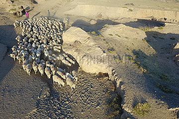CHINA-GANSU-sunan-HERD Migration (CN)