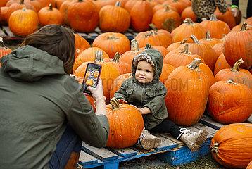 US-ILLINOIS--Lincolnshire-Pumpkin