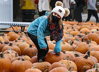 US-ILLINOIS--Lincolnshire-Pumpkin US-ILLINOIS--Lincolnshire-Pumpkin