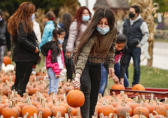 US-ILLINOIS--Lincolnshire-Pumpkin US-ILLINOIS--Lincolnshire-Pumpkin US-ILLINOIS--Lincolnshire-Pumpkin