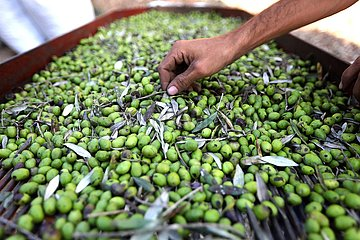 LIBANON-Olivenöl-PROCESSING LIBANON-Olivenöl-PROCESSING LIBANON-Olivenöl-PROCESSING