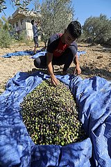 LIBANON-Olivenöl-PROCESSING LIBANON-Olivenöl-PROCESSING
