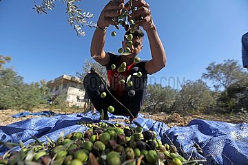 LIBANON-Olivenöl-PROCESSING