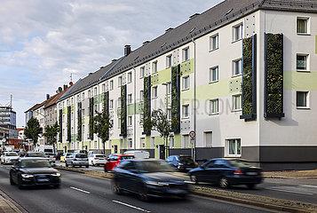 Fassadenbegruenung an Wohnhaeusern an der B224  Essen  Ruhrgebiet  Nordrhein-Westfalen  Deutschland