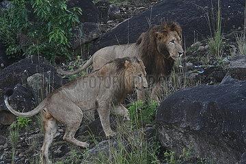 UGANDA-Karenga-NATIONALPARKS-WIEDERERöFFNUNG