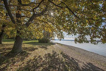 Herbsttag am Starnberger See  Percha  Bayern  Oktober 2020