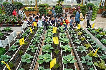 CHINA-JIANGSU-XUZHOU-AGRITOURISMUS (CN)