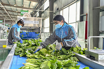 Xinhua Headlines: How China's Xinjiang is tackling new COVID-19 outbreak