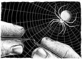 Serie Verletzungen von Tieren - Spinne