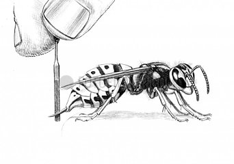 Serie Verletzungen von Tieren - Wespe