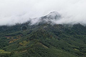 CHINA-HAINAN-Bawangling-GIBBONS-SURVEY (CN)