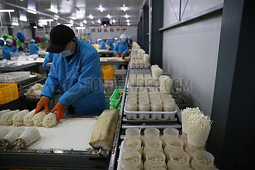 CHINA-GANSU-wuwei essbares FUNGUS INDUSTRY (CN)