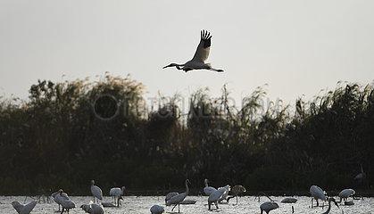 CHINA-JIANGXI-NANCHANG-WETLAND-Vogelschutzgebiet (CN)