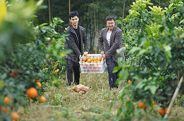 CHINA-JIANGXI-ORANGE LESE (CN)