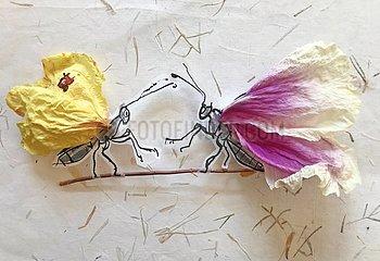 Schmetterlings-Duo