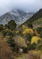 CHINA-TIBET-Nyingchi-Schneefall (CN)