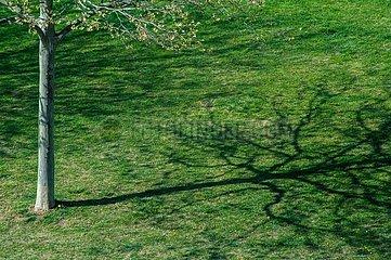 Baum wirft seinen Schatten