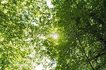 Bernrieder Park Sonnenstrahlen