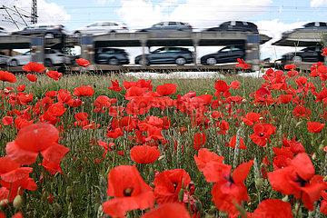 Trebbin  Deutschland  Gueterzug mit fabrikneuen PKW faehrt an einem Mohnblumenfeld vorbei